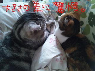 kyougaku