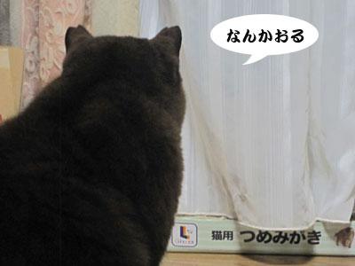 13_12_07_1.jpg