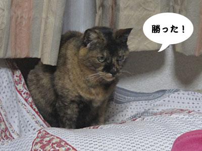 13_12_09_2.jpg