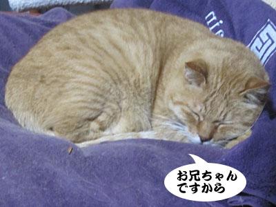13_12_09_3.jpg