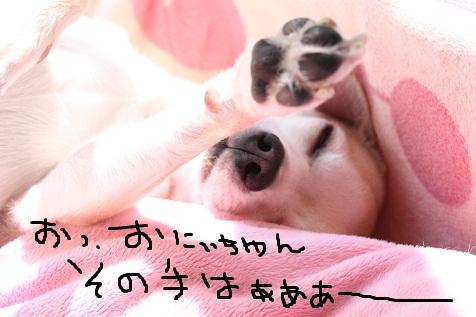IMG_0817.jpg