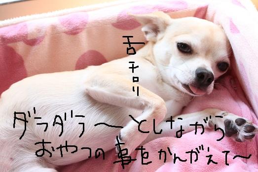 IMG_1533_20110918101423.jpg