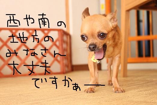 IMG_1612.jpg