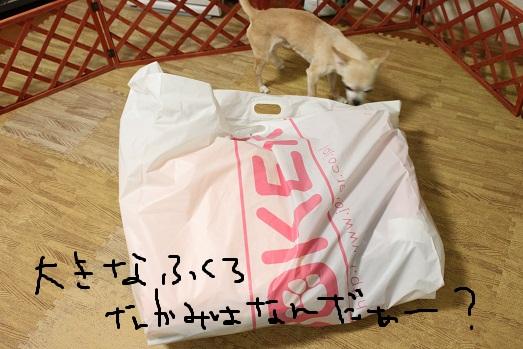 IMG_2031_20111015091650.jpg