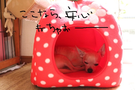 IMG_2237.jpg