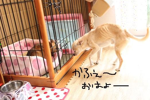 IMG_2402_20111031093403.jpg