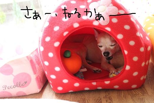 IMG_2819.jpg