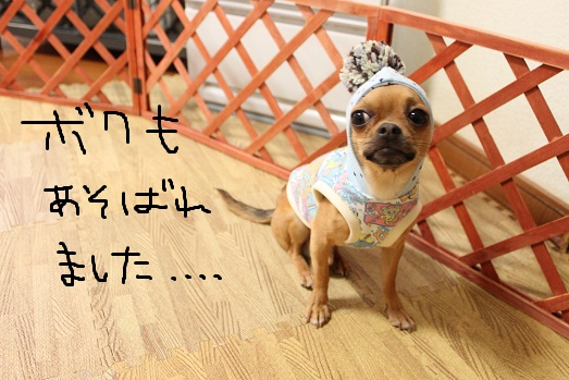 IMG_2950.jpg