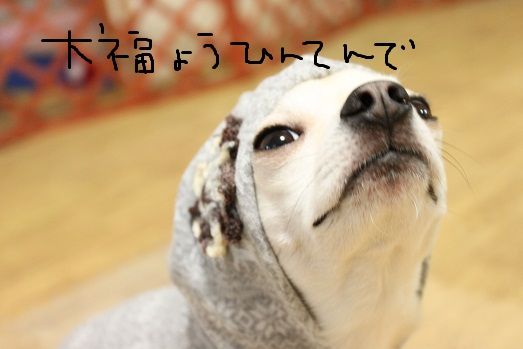 IMG_3184.jpg
