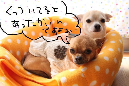 IMG_3257_20111226083759.jpg