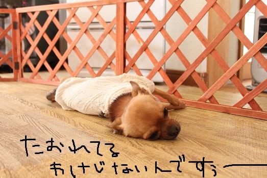 IMG_3267_20111224094611.jpg