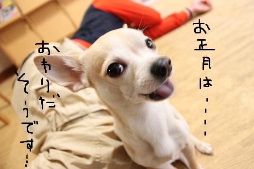 IMG_3416_20120104091724.jpg