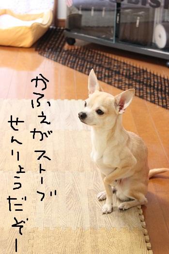 IMG_3549.jpg