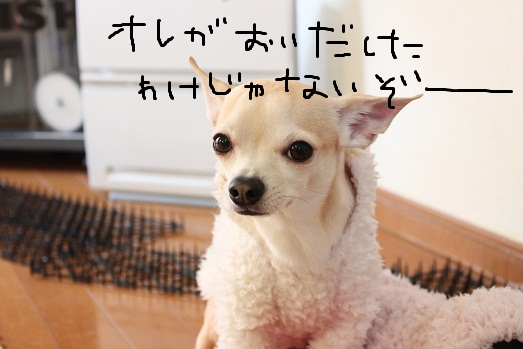 IMG_3568.jpg