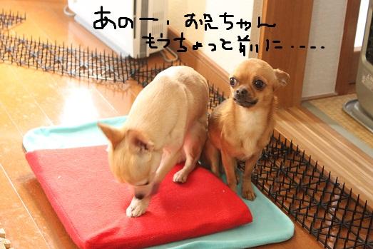 IMG_3817_20120131105107.jpg