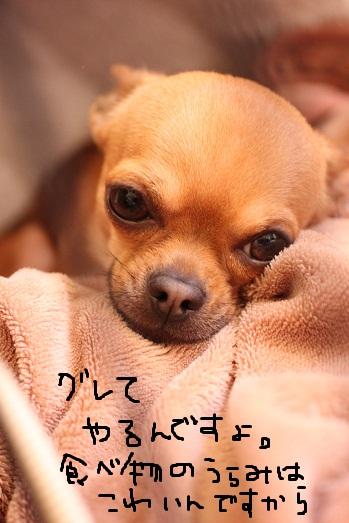 IMG_4026.jpg