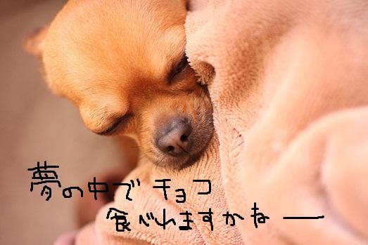 IMG_4031.jpg