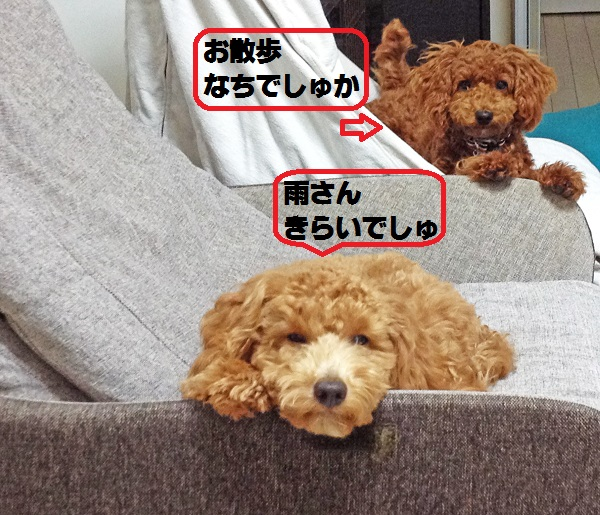 2014120708470407e.jpg