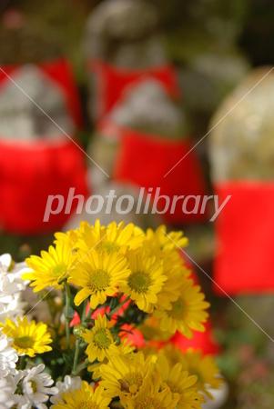 2799154 黄色い菊
