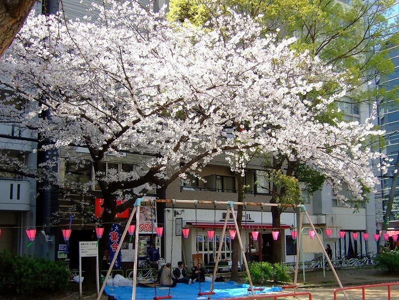 ■ お花見ワイン飲み 大阪・新町北公園