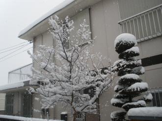 雪、午後もう快晴です。