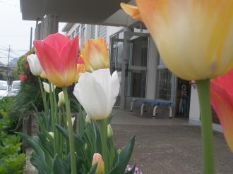 お花たちです。