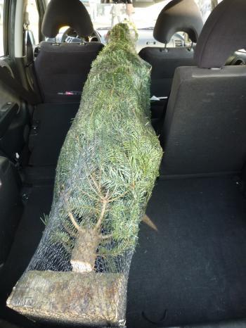 Mon Sapin  わたしのクリスマスツリー