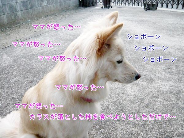 20121222_2.jpg