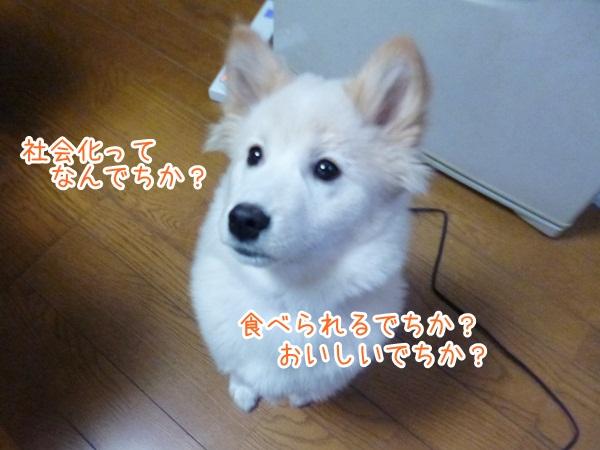 20130123_4.jpg