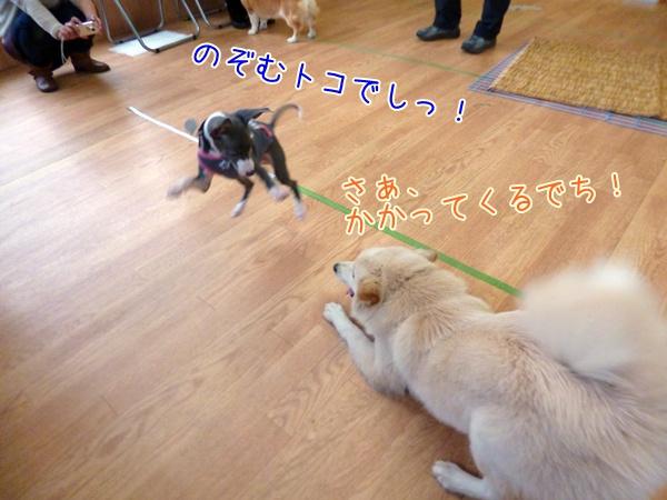 20130318_9.jpg