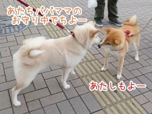 20130322_8.jpg