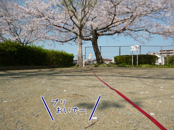 20130329_2.jpg