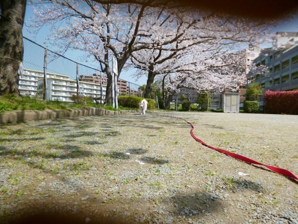 20130330_3.jpg