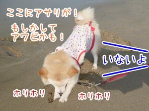 20130404_5.jpg
