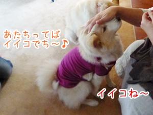 20130407_12.jpg