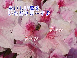 20130428_2.jpg