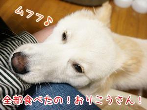 20130429_11.jpg