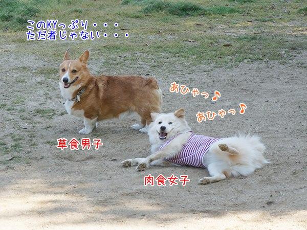 20130512_15.jpg