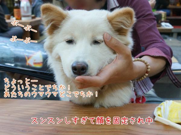 20130515_1.jpg