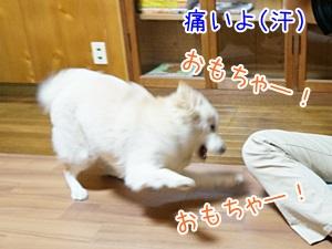 20130606_5.jpg