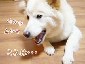 20130609_10.jpg