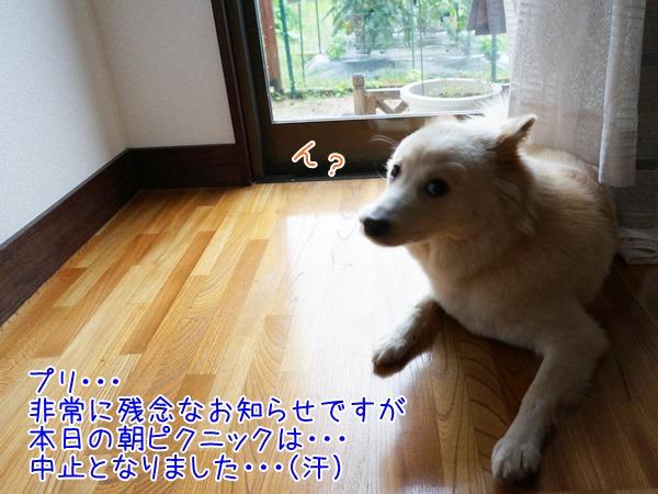 20130706_3.jpg