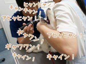 20130707_7.jpg