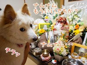 20130709_6.jpg