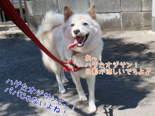 20130713_6.jpg