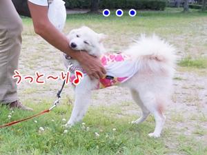 20130716_10.jpg