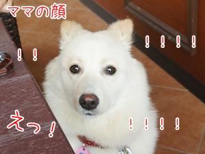 20130730_4.jpg