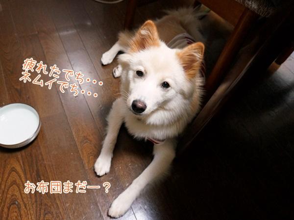 20130731_10.jpg