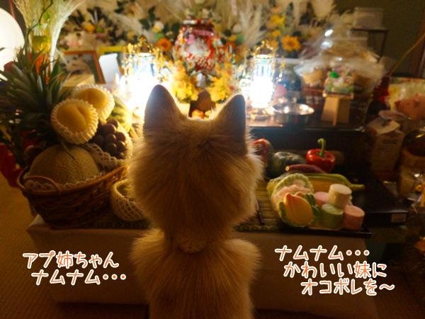 20130814_11.jpg