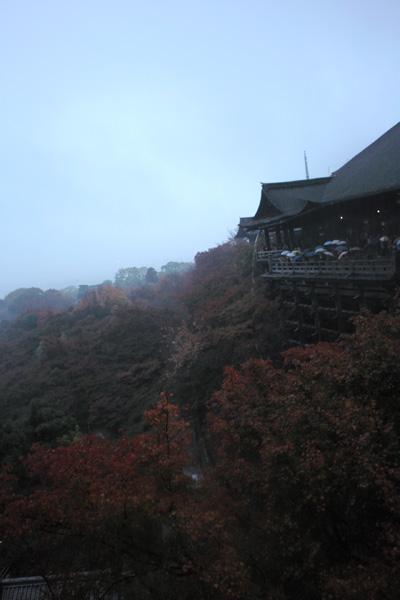 清水寺とモルフォ蝶のお話。